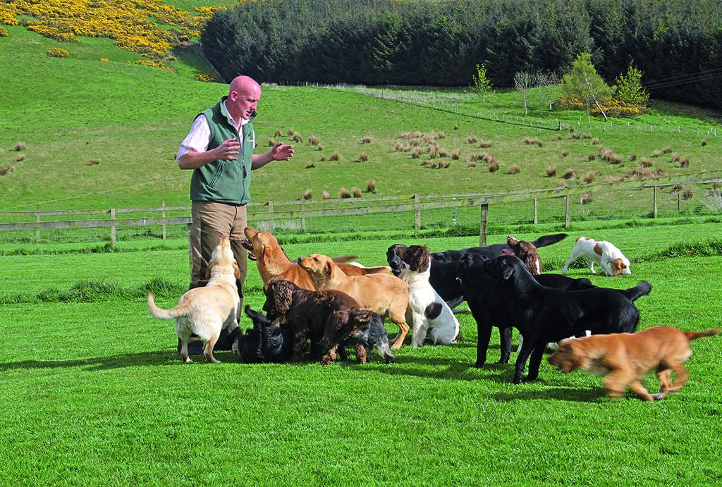 Kennel Club's Vulnerable Working Dog Breeds - Scottish Field